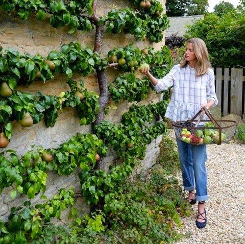 Japanese Garden Ideas Diy Projects
