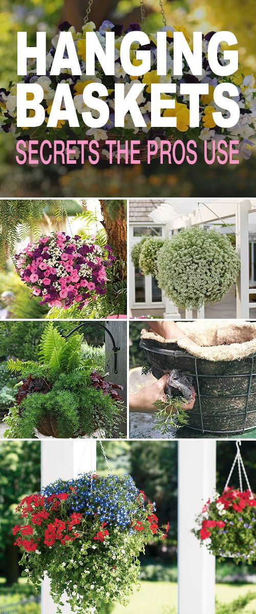 Hanging Baskets : 5 Secrets the Pros Use! • Great tips & secrets that'll help ...