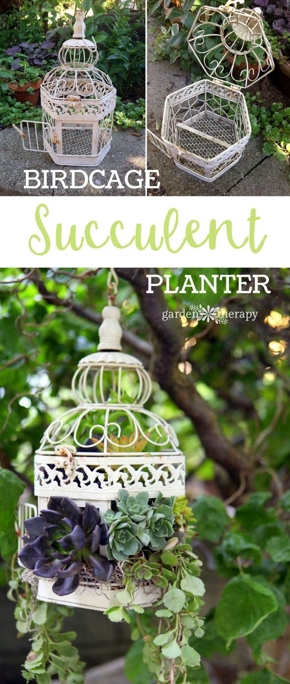 How to turn a decorative vintage-style birdcage into a hanging basket succulent ...