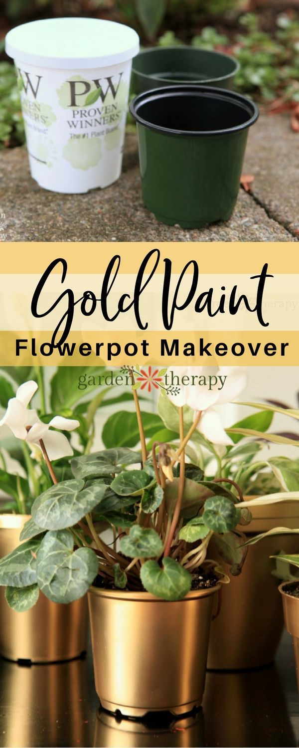 Make over those plastic nursery pots with some gold paint and they will look lik...