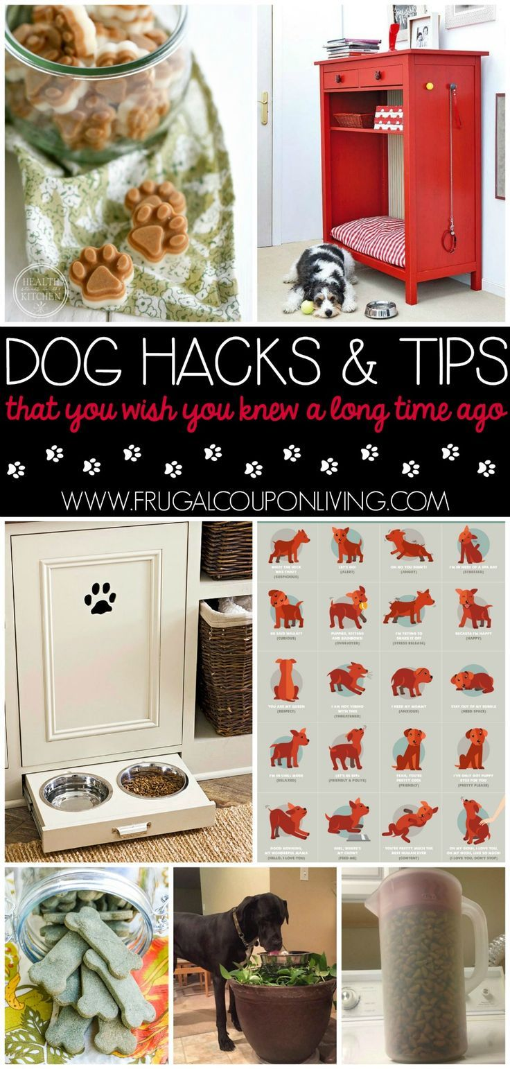 Tips & Hacks For Your Dog ...that you wish you knew a long time ago. Whether you...