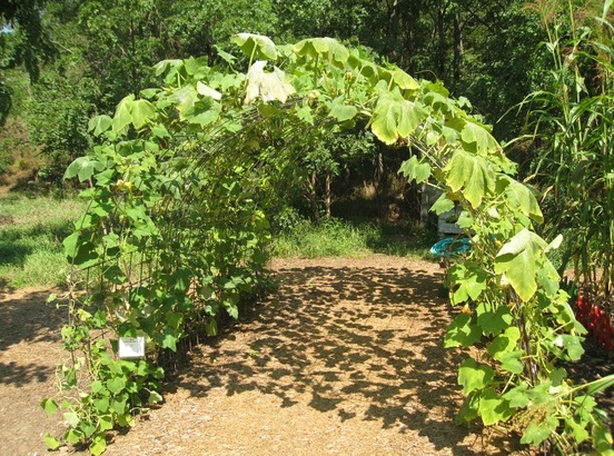 how-To-Build-Squash-Arch-3