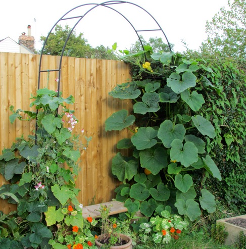 how-To-Build-Squash-Arch-2