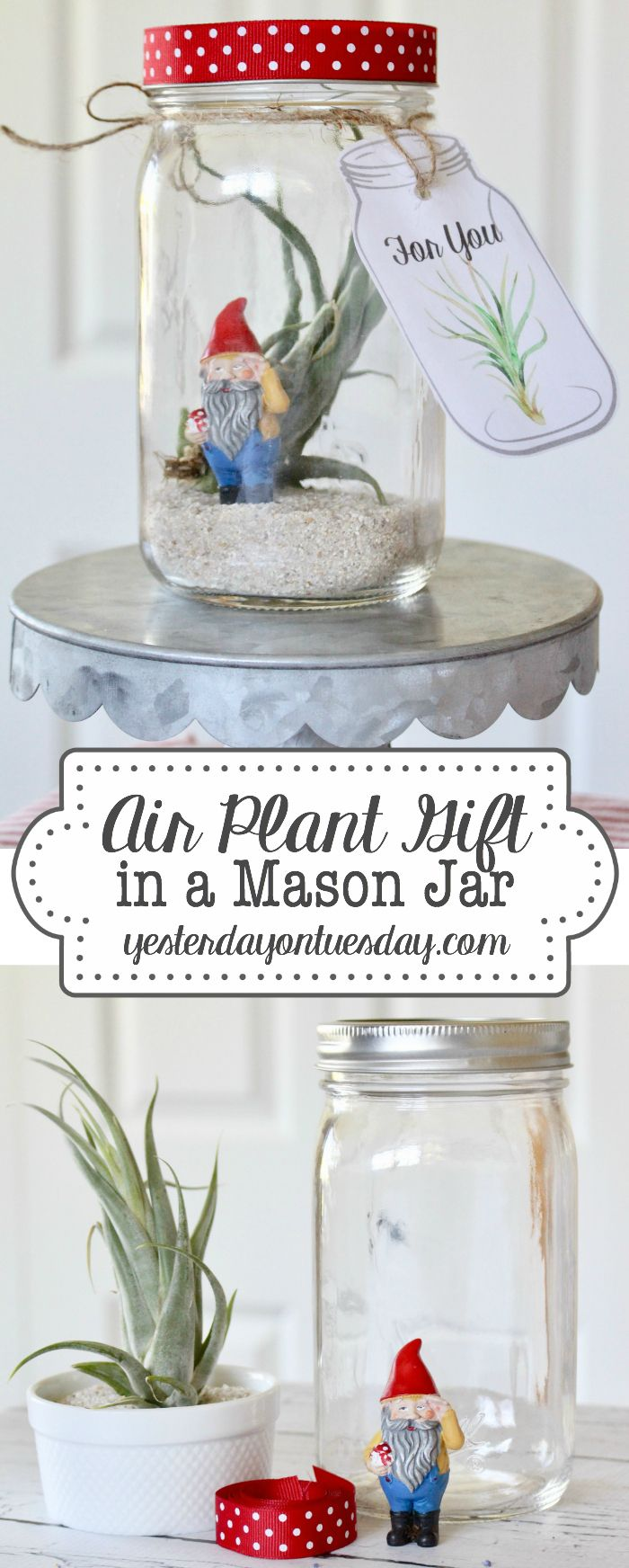 Air Plant Gift in a Mason Jar with printable tags for for any occasion including...