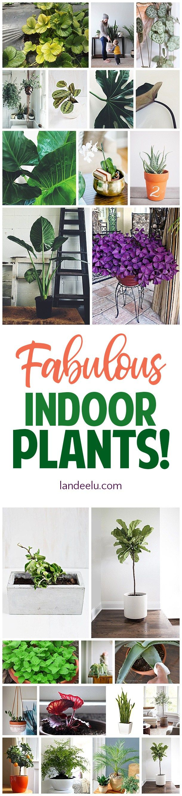 Great suggestions for the best indoor plants for the home! #plantlady #indoorpla...