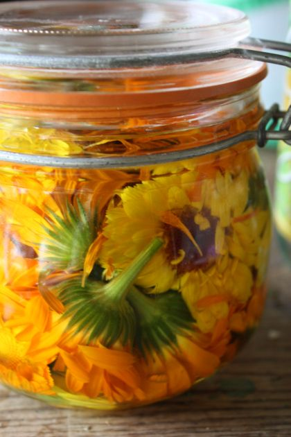 Calendula infusion for preventing infection in skin injuries and helping to heal...