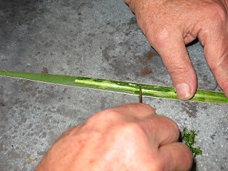 How to make soap out of yucca leaves is EASY with this step by step