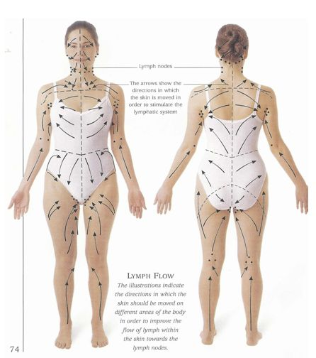 Lymph drainage pattern for skin brushing- detox, drop weight, and cure cellulite...