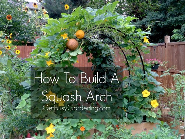 how-To-Build-Squash-Arch