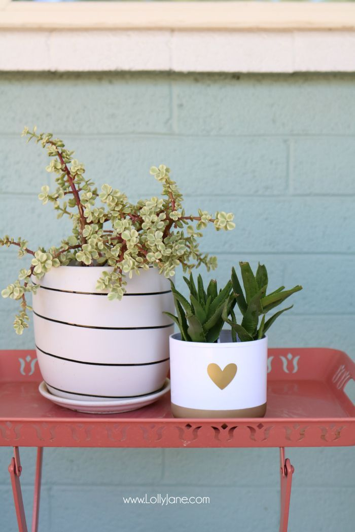 DIY toothbrush holder succulent! Turn a toothbrush holder into a succulent plant...