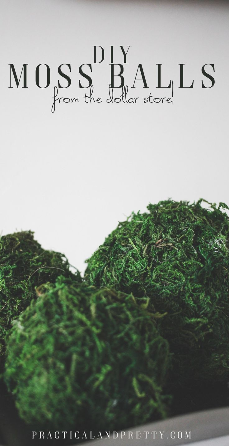 Don't splurge on expensive designer moss balls when you can make them with t...