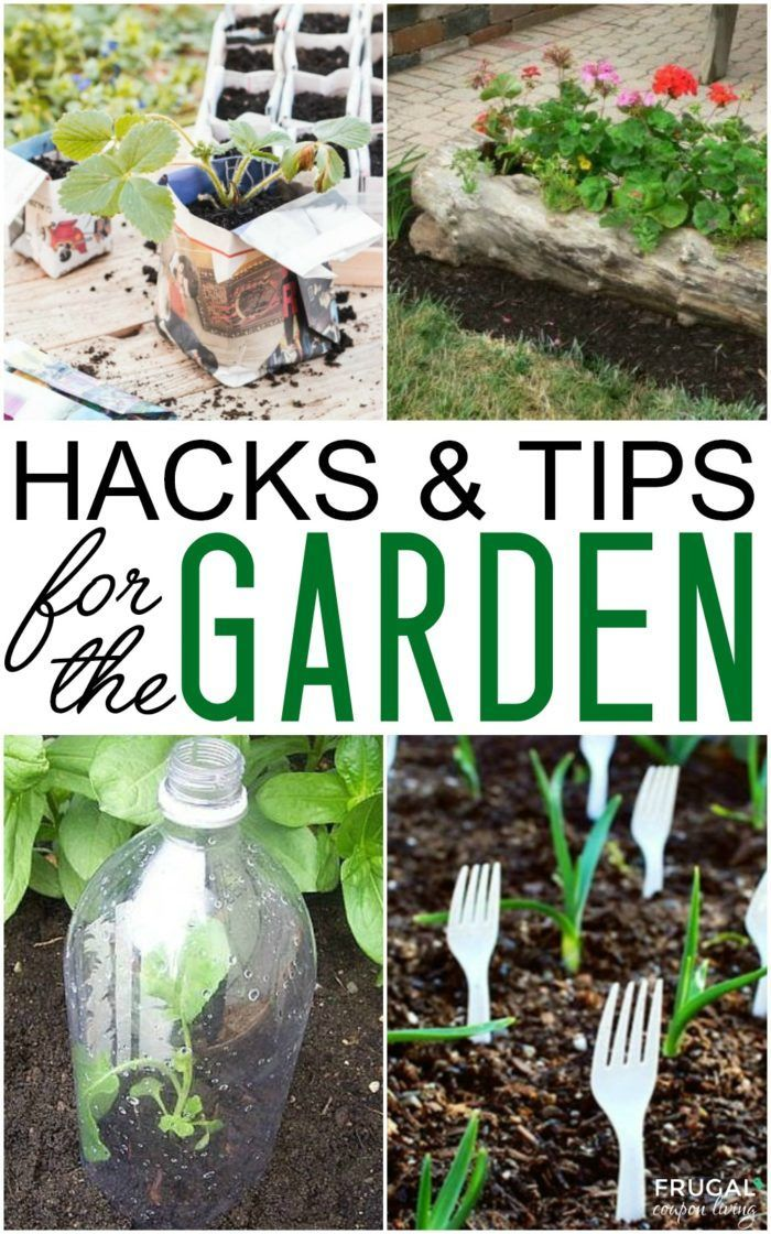 Gardening Hacks and Tips for the Wannabe Gardener. Turn that black thumb into a ...