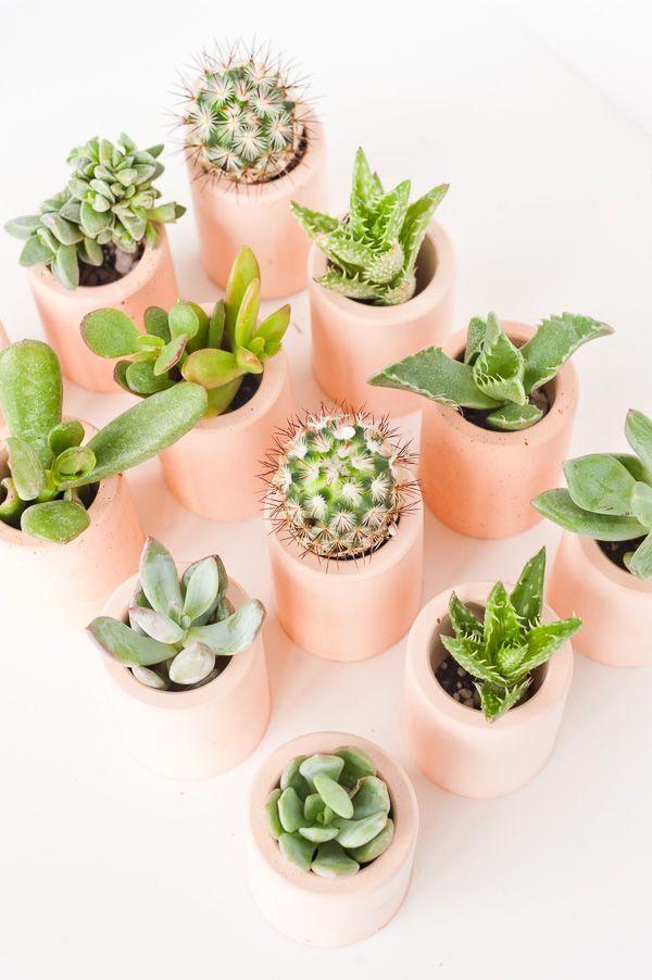 How to Make DIY Plaster Mini Planters