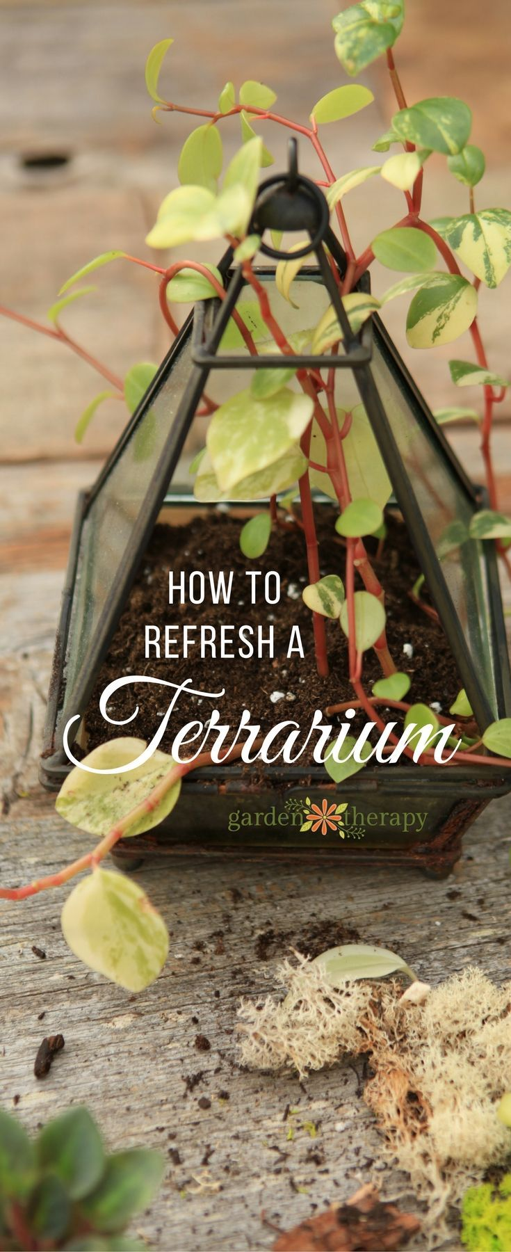 Refresh a terrarium annually to keep it gorgeous and healthy - You don't have ...