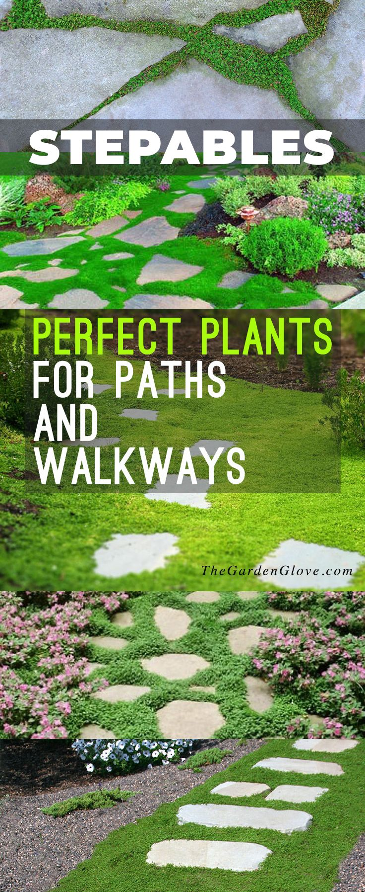 Stepables: Perfect Plants for Paths and Walkways! • Check out this blog post w...