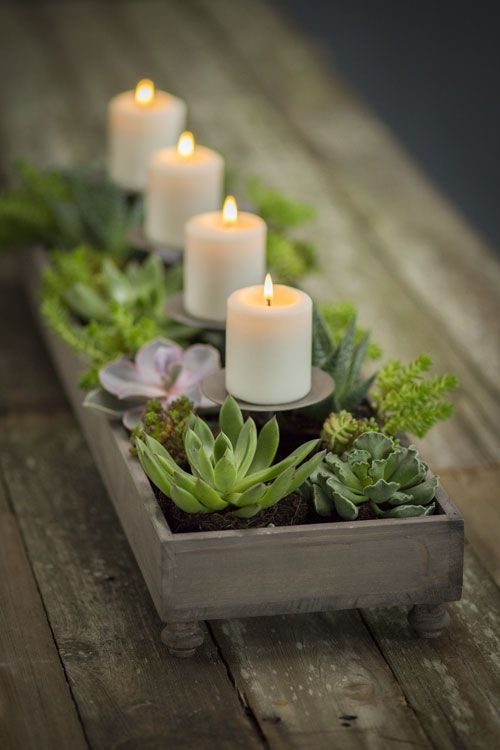 Stylish notes on Decor :: Why Succulents are the Perfect Houseplant