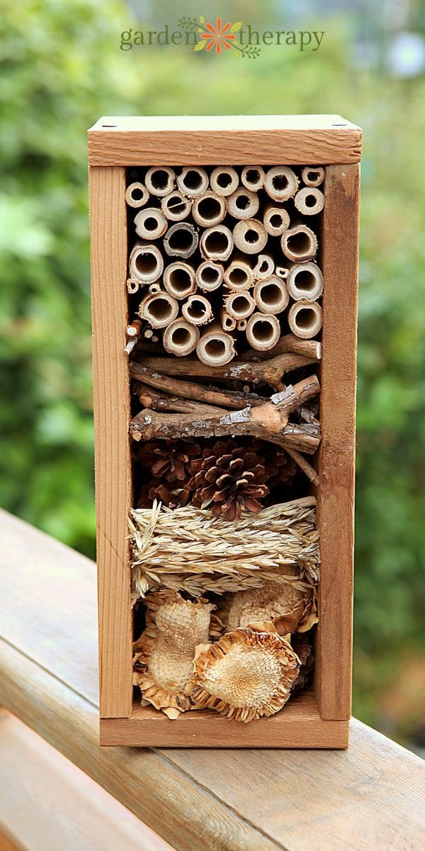 How to create a bug hotel for overwintering beneficial insects in your home gard...