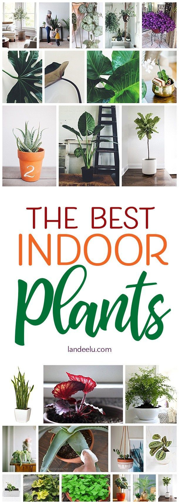 I love these suggestions for the best indoor plants for my home. Great list! #in...