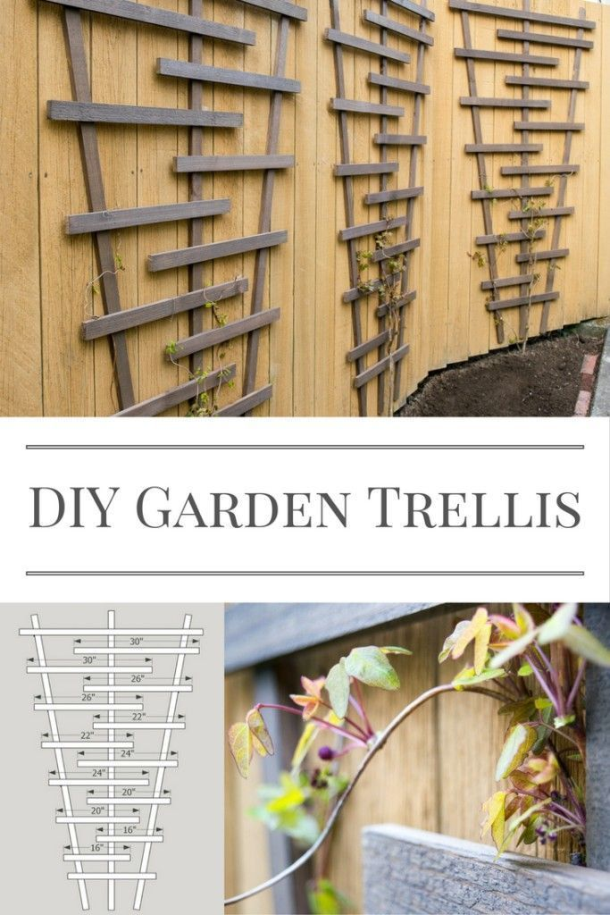 Build this garden trellis and watch your vines climb! Free woodworking plans at ...