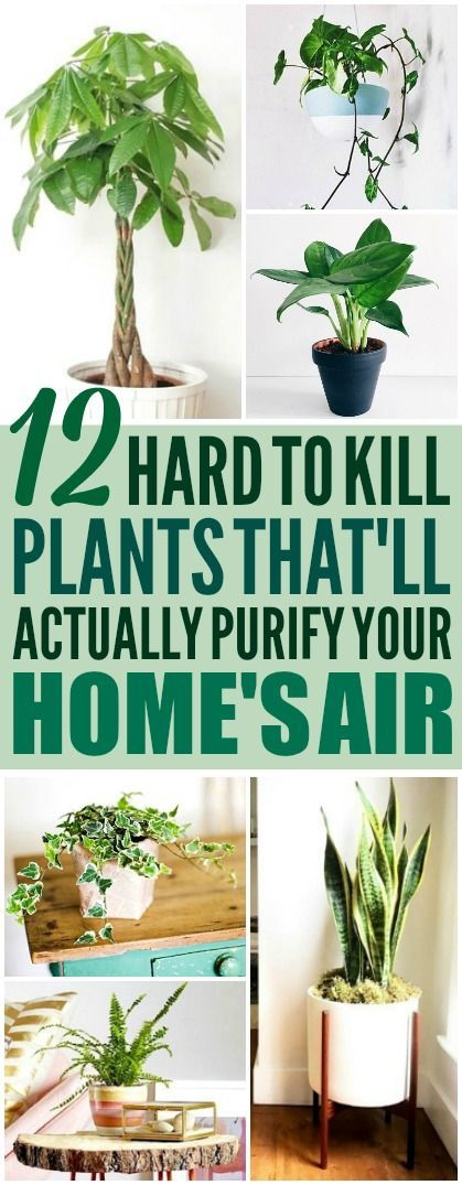 These 12 air purifying plants are THE BEST! I'm so glad I found these GREAT home...