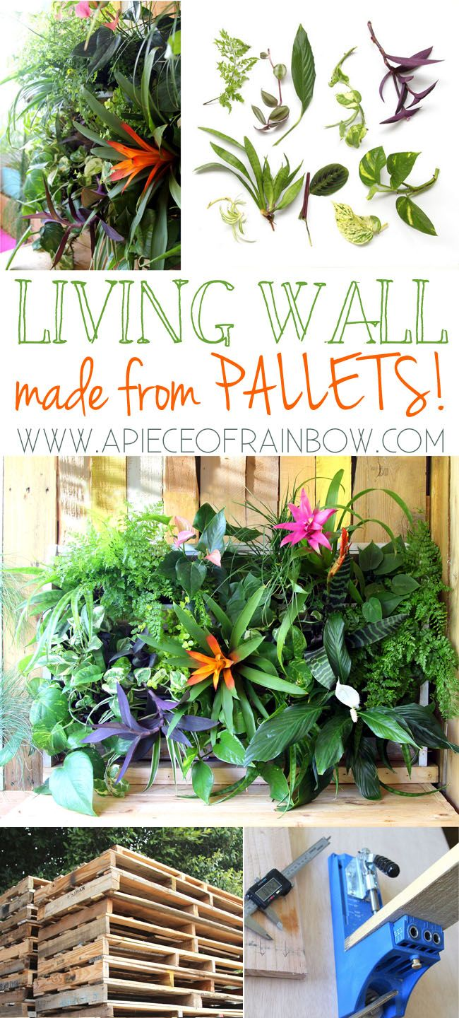 DIY Tropical Pallet Living Wall : Great pallet project that anyone can build it ...