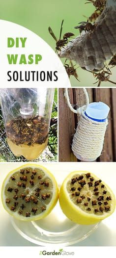 Great Ideas, Tips and Tutorials on DIY Backyard Wasp Solutions! • Learn the di...
