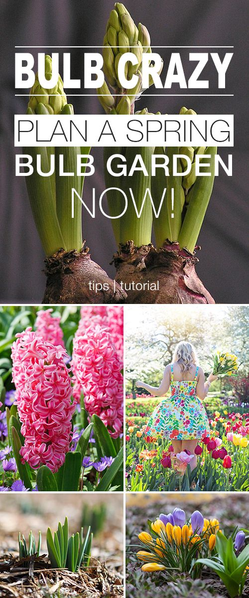 Bulb Crazy | Plan A Spring Bulb Garden Now! • Learn how to plan, plant and car...