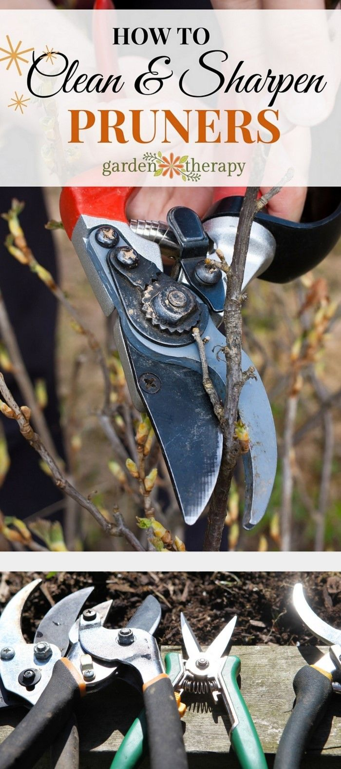 How to Care For Pruners - Follow these simple steps to keep your pruners in tip-...
