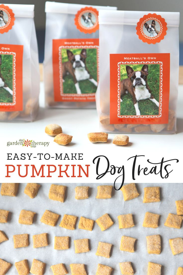 Diy Crafts These Pumpkin Dog Treats Are A Healthy Source Of Fiber