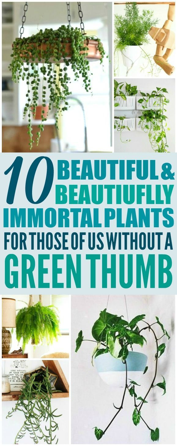 These 10 Hanging Plants DIY ideas are THE BEST! I'm so glad I found these AWESOM...