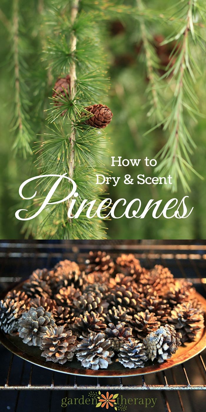 Homemade Scented Pine Cones and a Pretty DIY Diffuser Smelling your favorite fra...