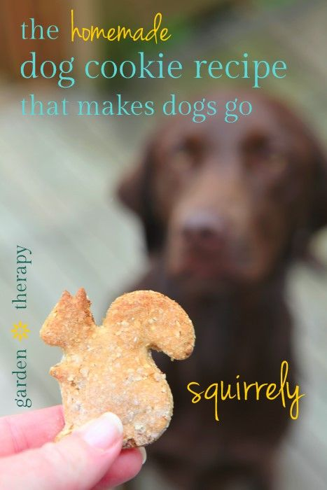 Diy Crafts The Homemade Oatmeal Dog Cookies That Drive Dogs