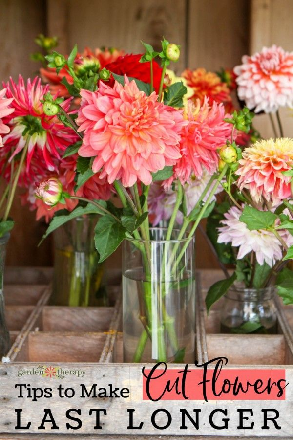 How to Make Cut Flowers Last Longer - Fresh cut flowers are such a beautiful add...