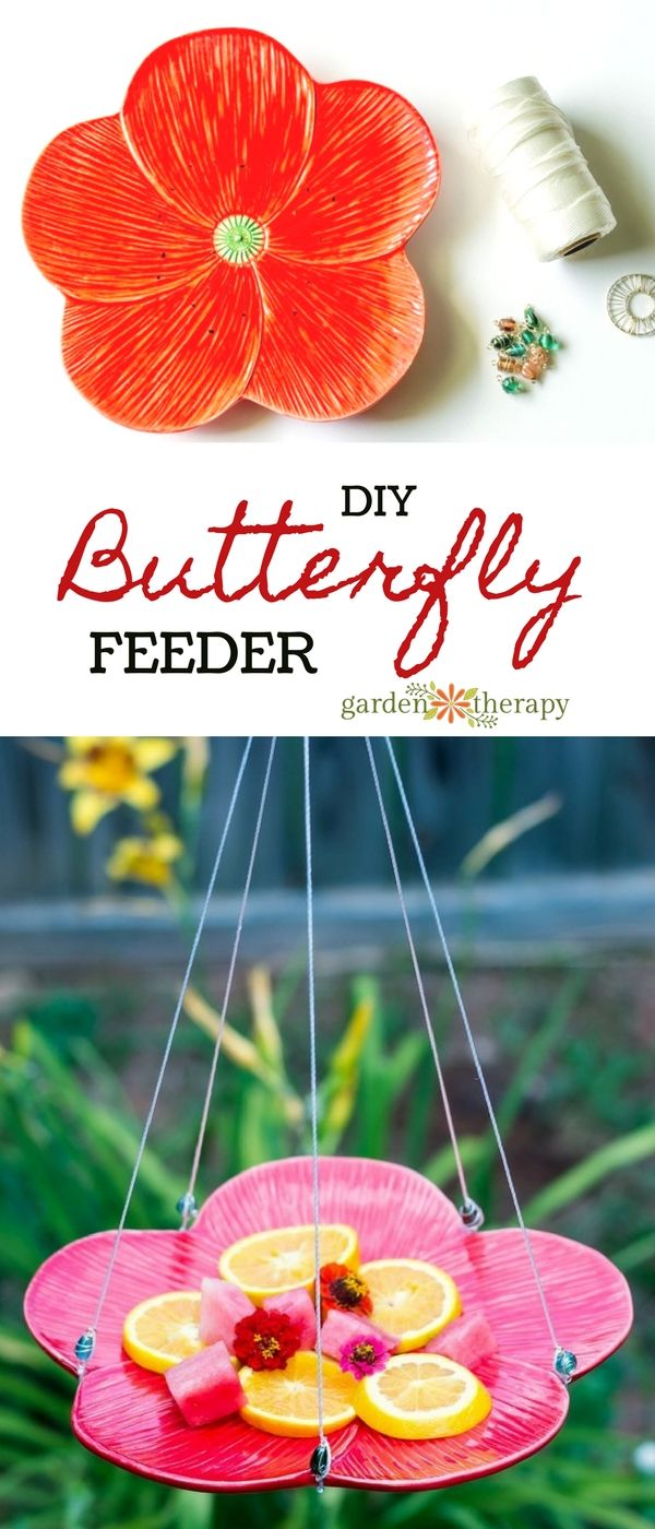 How to make a Butterfly Feeder - Butterflies are magical creatures that grace us...