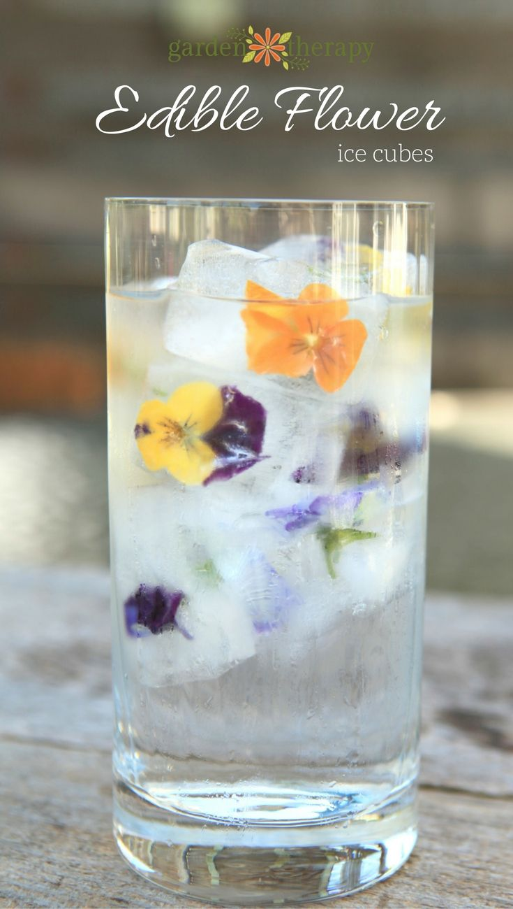 Edible Flower Ice Cubes made perfectly through two steps. To make edible flower ...