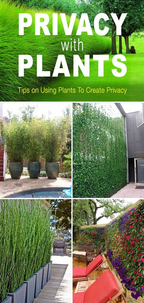 Tips and ideas on how to use plants to create privacy in your garden or yard! ...