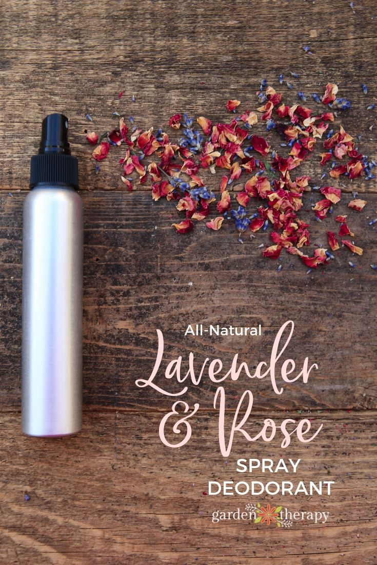 All-Natural Rose and Lavender Spray Deodorant Recipe - It's pretty, floral, an...